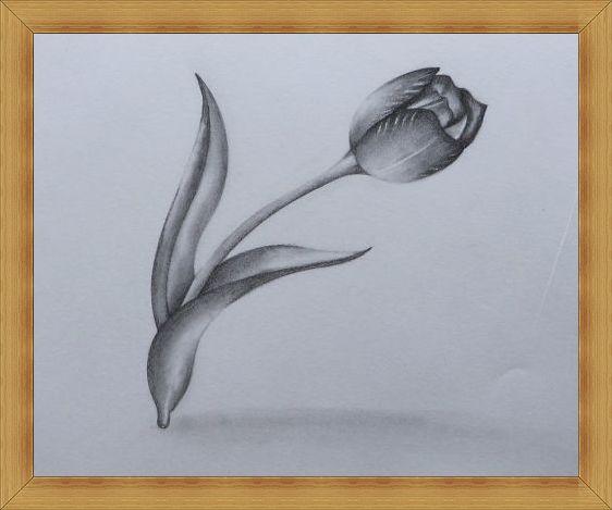 Gambar Sketsa Bunga Tulip