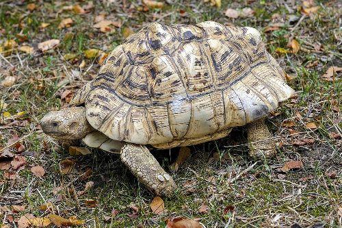 gambar kura-kura comel
