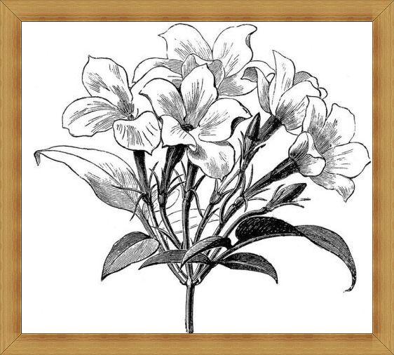 Gambar Sketsa Bunga Indah Mulai Dari Mawar Melati Anggrek Dan Lainnya Sosmedmu