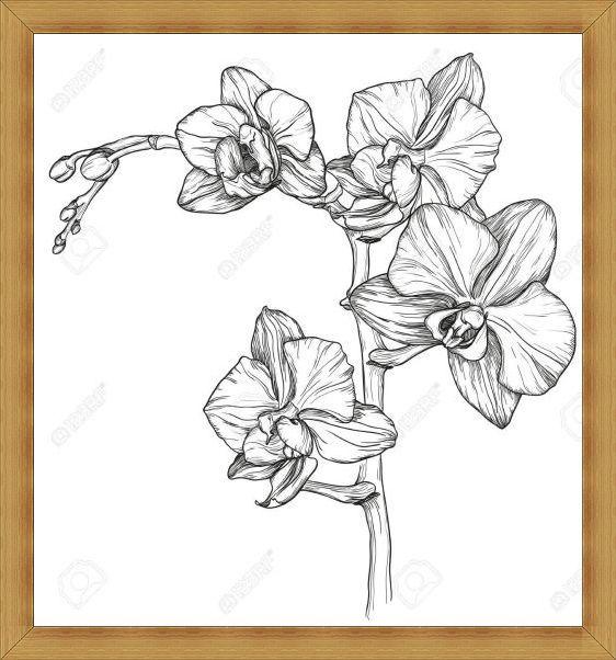 Gambar Sketsa Bunga Anggrek Indah